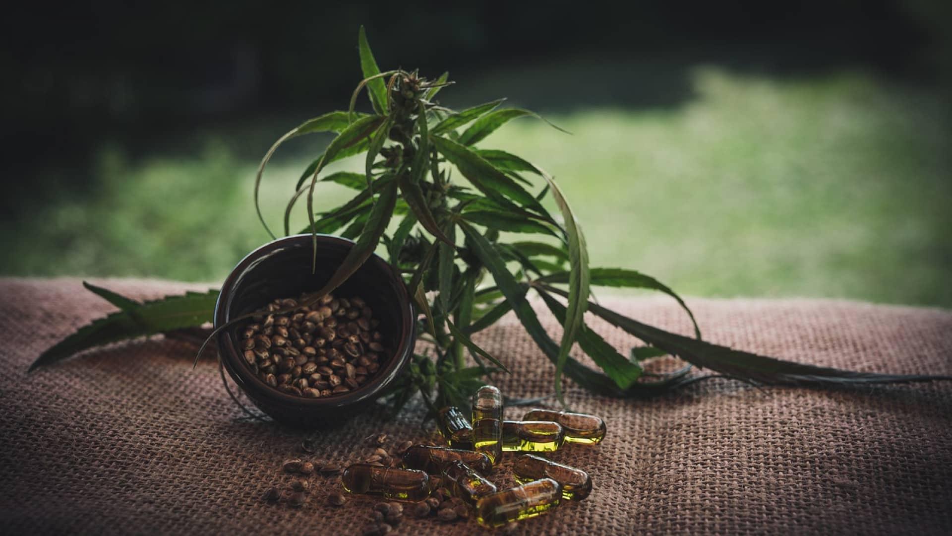 Pourquoi intégrer les graines de collection à votre routine ?